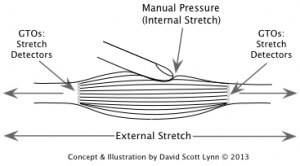 Muscle Stretch with manual Pressure - medical massage therapists in a medical practice