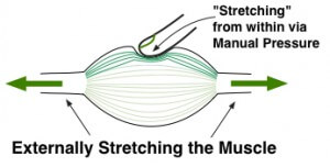 Stretch-vs-Finger-Pressure for Reducing Muscle Tension - chronic muscle tension and nerve pain