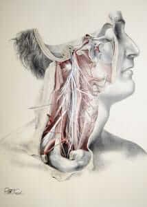 Many Nerves in neck - structural bodywork, medical massage