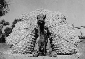 Straw That Broke Camels Back - structural bodywork